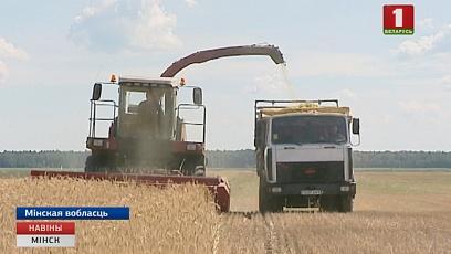 Сельхозорганизациям Минской области осталось убрать 1 % площадей