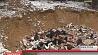 В Быхове обнаружили незаконный могильник отходов убойного производства У Быхаве выявілі  незаконны  могільнік адходаў забойнай вытворчасці