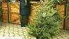 Елочные базары начнут работать накануне католического Рождества Елачныя базары пачнуць працаваць напярэдадні каталіцкага Раства