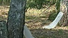 Лесхозы Минской области начали заготовку березового сока Лясгасы Мінскай вобласці пачалі нарыхтоўку бярозавага соку