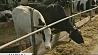 Как хозяйства области сохраняют корм для животных? Як гаспадаркі вобласці захоўваюць корм для жывёл?