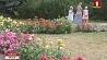 В Ботаническом саду в течение июня и июля пройдут музыкальные вечера У Батанічным садзе на працягу чэрвеня і ліпеня пройдуць музычныя вечары