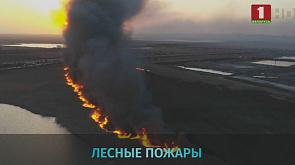 На юго-востоке России горят леса На паўднёвым  усходзе Расіі гараць лясы