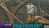 Животных в Минском зоопарке переводят в летние вольеры