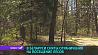 В Беларуси сняты ограничения на посещение лесов У Беларусі знятыя абмежаванні на наведванне лясоў
