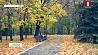 На  масштабную уборку палой листвы на улицы Минска выехала спецтехника На  маштабную ўборку апалай лістоты на вуліцы Мінска выехала  спецтэхніка