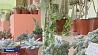 В Ботаническом саду открылась выставка суккулентных растений У Батанічным садзе адкрылася выстава сукулентных раслін