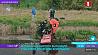 Мальчика из болота вытащили спасатели в Березовском районе Хлопчыка з балота выцягнулі ратавальнікі ў Бярозаўскім раёне