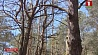 В белорусских лесах ситуация под контролем
