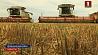 Планку в три тысячи тонн зерна преодолели два комбайнера из Минской области Планку тры тысячы тон збожжа пераадолелі два камбайнеры з Мінскай вобласці 2 combine operators from Minsk region harvest 3 thousand tons of grain