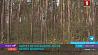 Ограничения на посещение лесов введены в Мозырском и Столинском районах Абмежаванні на наведванне лясоў уведзены ў Мазырскім і Столінскім раёнах