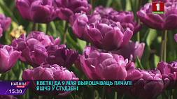 Цветочные тематические композиции украсили столицу Кветкавыя тэматычныя кампазіцыі ўпрыгожылі сталіцу Floral themed compositions decorate Minsk