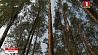 В трех районах Минской области запрещено посещать леса У трох раёнах Мінскай вобласці забаронена наведваць лясы