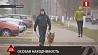 Служебный пес из Борисова становится легендой