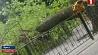 Во время непогоды в Бресте серьезно пострадал ребенок Падчас непагадзі ў Брэсце сур'ёзна пацярпела дзіця