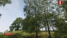 В Беларуси на этой неделе тепло, без осадков У Беларусі на гэтым тыдні цёпла, без ападкаў