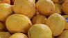 Турция ограничила экспорт лимонов