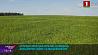 Аграрии Минской области ведут активный сев сельхозкультур