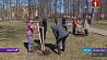 В Миорском районе к субботнику присоединилась  молодежь У Мёрскім раёне да суботніка далучылася моладзь