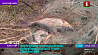 Масштабный рейд на озере Селява в Крупском районе провели инспекторы природоохраны
