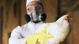 Беларусь ограничивает ввоз птицы из медье Бач-Кишкун и Чонград в Венгрии из-за птичьего гриппа