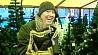 Более 50 видов искусственных елей предлагают столичные магазины Больш за 50 відаў штучных елак прапануюць сталічныя магазіны