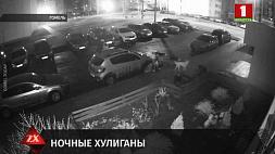 В Гомеле стая бродячих собак испортила припаркованный автомобиль