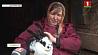 В одном из хозяйств Гродненской области решили развивать кролиководство