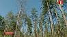 День работников леса отмечают сегодня в Беларуси Дзень работнікаў лесу адзначаюць сёння ў Беларусі