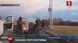 Двух курьеров живого товара задержали правоохранители в Гродно и Могилеве