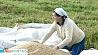 Белорусские аграрии уже вплотную приблизились к завершению жатвы Беларускія аграрыі ўжо ўшчыльную наблізіліся да завяршэння жніва