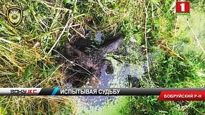 В Бобруйском районе задержали браконьера со стажем