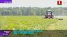 В сельхозорганизациях Минской области первый укос У сельгасарганізацый Мінскай вобласці першы ўкос
