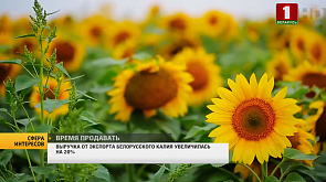 Выручка от экспорта белорусского калия увеличилась на 20%