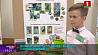 Лучших юных исследователей выбрали в Минской области