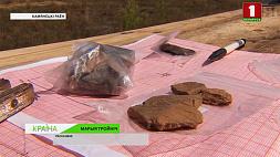 Славянскую деревню восстановят в Беловежской пуще Славянскую вёску адновяць у Белавежскай пушчы