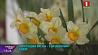 Репетиция весны в Ботаническом саду Рэпетыцыя вясны ў Батанічным садзе