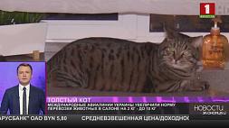 Украинская авиакомпания разрешила брать в салон толстых котов