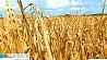 Аграрии столичного региона получают поздравления с почином Аграрыі сталічнага рэгіёну атрымліваюць віншаванні з пачынам