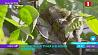 Посетители Венского зоопарка впервые увидели карликовую игрунку