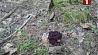 Проводится проверка по факту смерти женщины, отравившейся грибами  Праводзіцца праверка па факце смерці жанчыны, якая атруцілася грыбамі