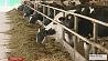 В Беларуси утвержден перечень  сельхозкультур, скота и птицы, подлежащих обязательному страхованию  У Беларусі зацверджаны пералік  сельгаскультур, буйной жывёлы і птушкі,  якія падлягаюць абавязковаму страхаванню