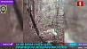 Подробности убийства охотника в Кировском районе Падрабязнасці забойства паляўнічага ў Кіраўскім раёне