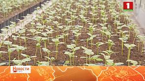 Какие экзотические культуры уже растут в открытом грунте?