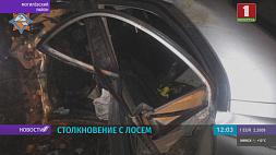 Под Могилевом автомобиль сбил лося  Пад Магілёвам аўтамабіль збіў лася